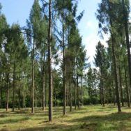Zdjęcie plantacji